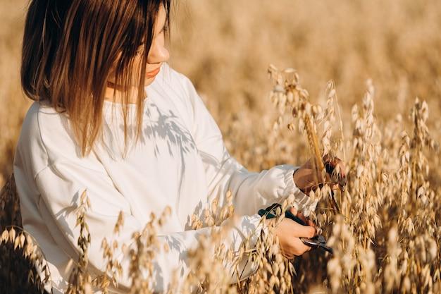 若い女の子が手でオート麦の耳を切ります。
