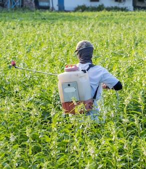 청년 농부 주인이 아침에 해충과 식물 질병을 예방하기 위해 자신의 참깨 밭에 살충제 (농약)를 뿌리고있다, 클로즈업, xigang, tainan, taiwan