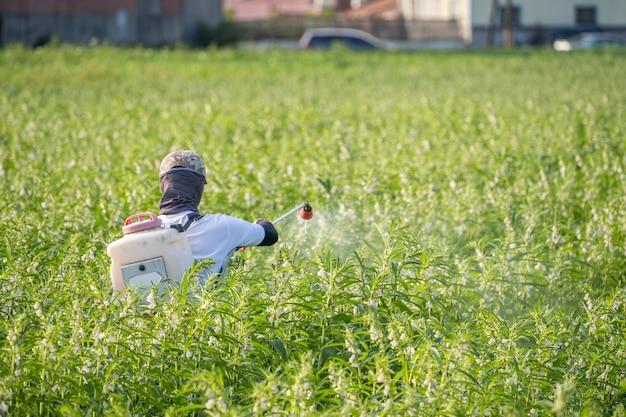 자신의 참깨 밭에 농약 (농약)을 뿌리는 청년 농부