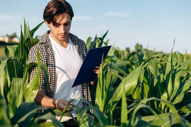 若い男が畑の真ん中でとうもろこしの収穫を見ています。農学、農業。情報を確認します。
