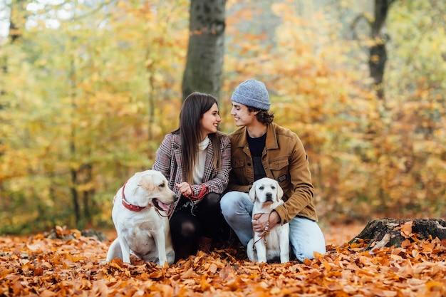 若いかわいいカップルと2人の黄金のラブラドールが秋の公園を歩いています