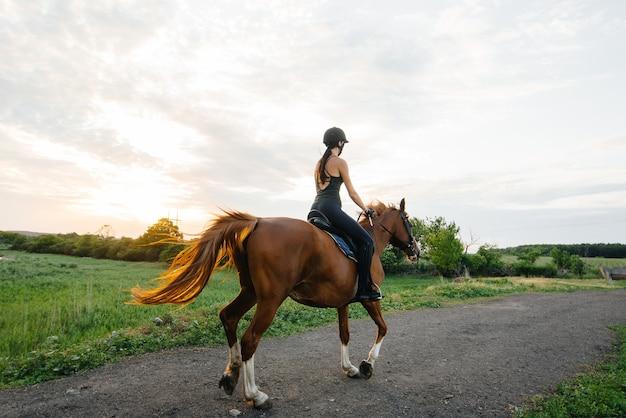 Молодая симпатичная девушка-жокей верхом на породистом жеребце занимается верховой ездой на закате. конный спорт., верховая езда.