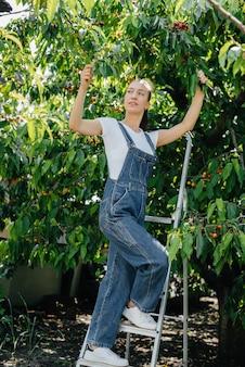 オーバーオールの脚立に乗った若いかわいい女の子は、夏の日に庭で熟した甘いサクランボを収集します。