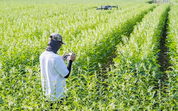 若い技術者の農家が、リモートコントロールを使用して、農場を追跡するドローンをナビゲートし、朝のゴマ作物の成長を監視しています。テクノロジー4.0のコンセプト