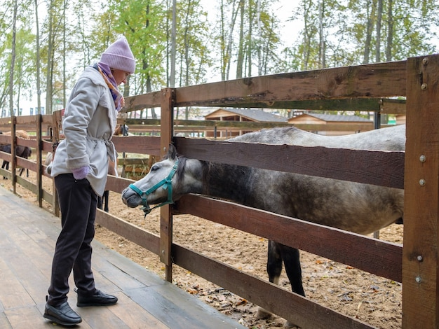 동물원에서 말과 소통하는 젊은 여성