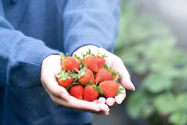 파란색 스웨터에 젊은 여자가 집어 들고 정원에 고립 된 손에 신선한 계절 딸기를 들고 가까이