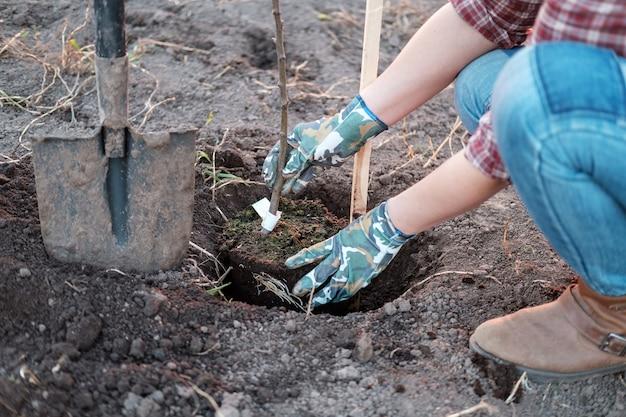 집 근처 정원에서 사과 나무를 심는 젊은 여자. 봄에 과일 나무 모종 심기