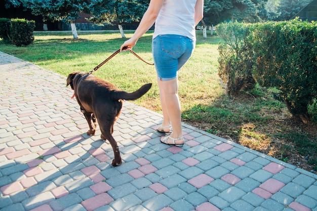 若い女性が犬と一緒に公園を散歩します。茶色のラブラドールが飼い主の隣のひもにつないで歩いています。夏の散歩。犬の訓練。