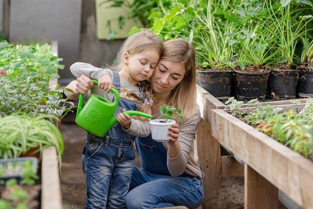 幼い娘を持つ若い女性が、春に温室の鉢に植物を植えています。