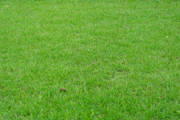 Трава в саду как abackground.