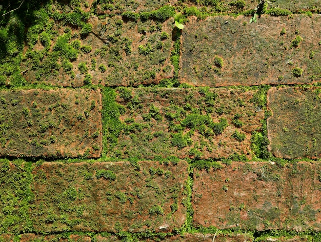 Abandoned brick wall with green mossy plants growing between terracotta bricks