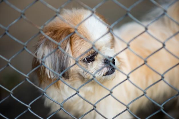 ケージに閉じ込められた放棄された犬