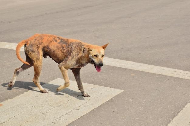 Брошенная собака лежит на земле с грустными глазами