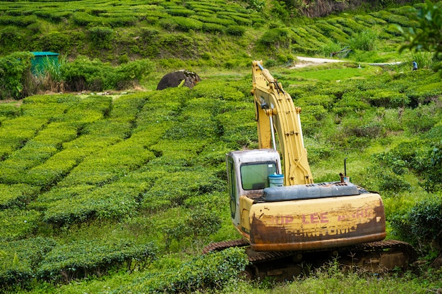 An abandoned excavator in the middle of a tea plantation. heavy construction machinery tractor in green tea fields, pure nature.