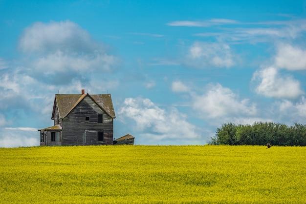 手前に咲くカノーラ作物とカナダの大草原の廃屋