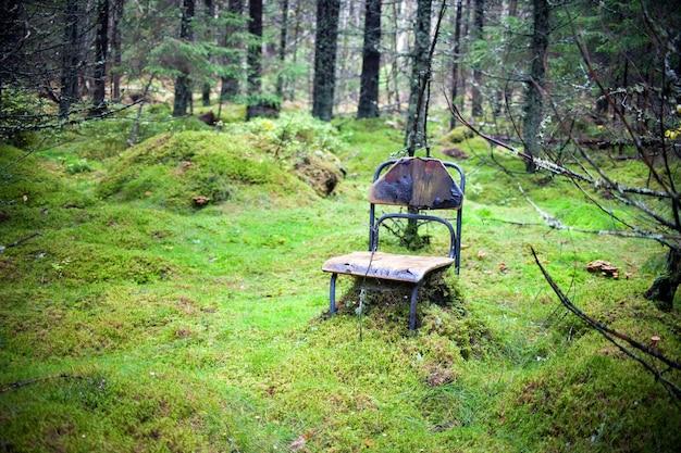 앉을 수 있는 아주 오래되고 손상된 의자가 있는 버려진 잃어버린 숲 - 휴식과 녹색 모쉬. 가 유령 빈 숲입니다. 외로움과 공허함 개념입니다.