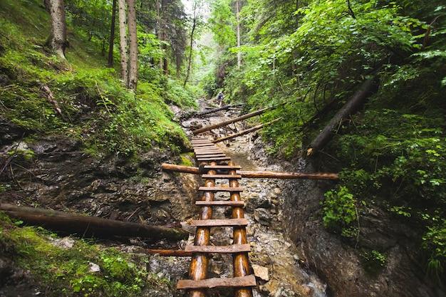깊은 야생 무성한 정글 숲에서 산 강 위에 버려진된 오래 된 목조 다리. 아무데도 가는 길. 야외 극한 활동. 야생의 자연. 여행 자연 배경