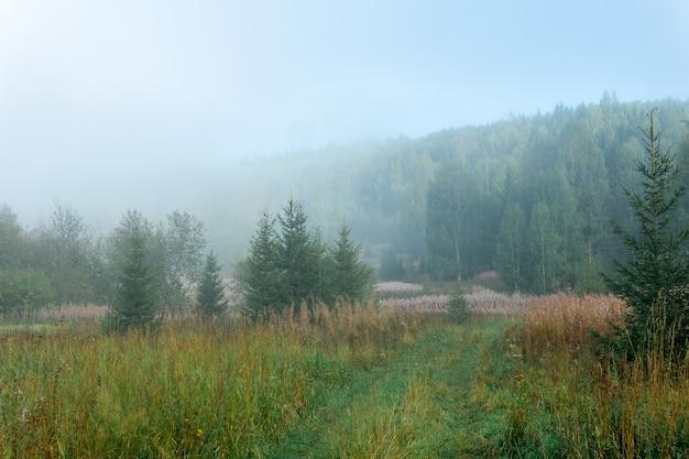 朝の霞に秋の草が生い茂った放棄された畑