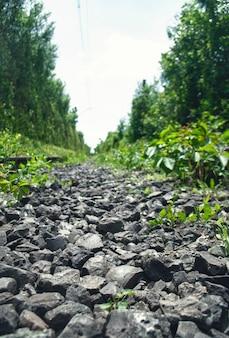 背の高い密集した緑の木々の間の廃線線路線路上の小さな黒い石