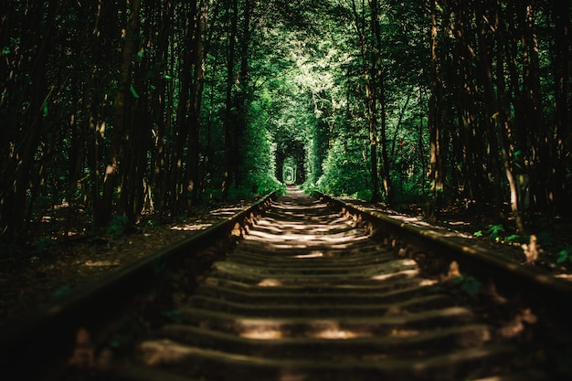 Abandoned railway in a green forest