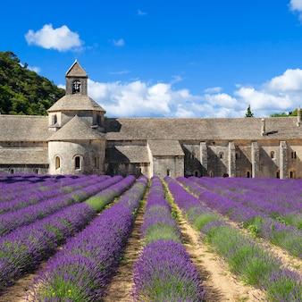 セナンク修道院と咲く列のラベンダーの花。フランス。