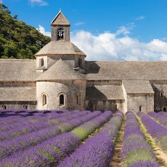 セナンク修道院とラベンダー畑。ゴルド、リュベロン、ヴォクリューズ、プロヴァンス、フランス、ヨーロッパ。