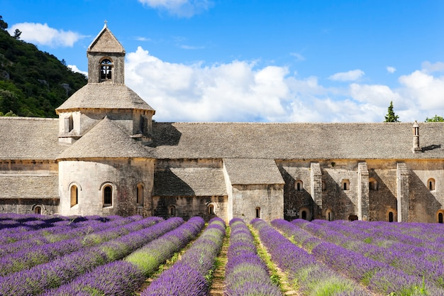 Abbey of senanque and lavender flowers. france.