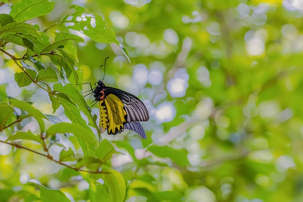 About the colored butterfly in the sunny day