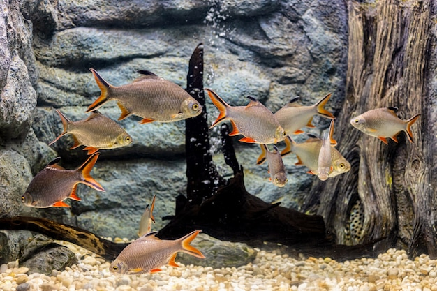 О морской рыбе и пресноводной рыбе в аквариуме
