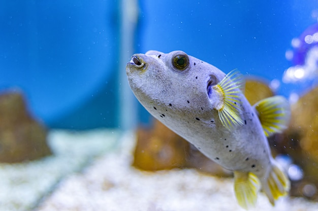 About sea fish and fresh water fish in aquarium