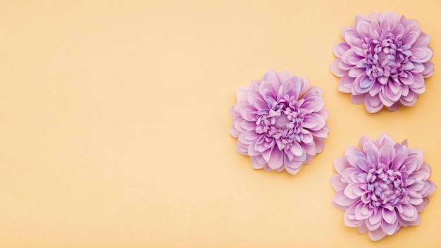 黄色の背景を持つビュー花のフレームの上