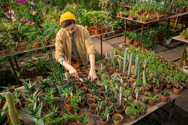 鉢植えの植物とテーブルに立って温室でそれを世話する流行に敏感な帽子の若い栽培者のビューの上