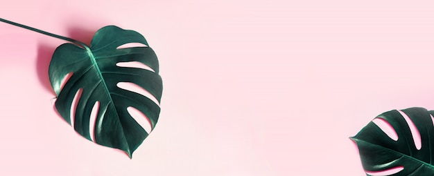 Abstarctフラットレイアウトとモンステラの葉の上から見る
