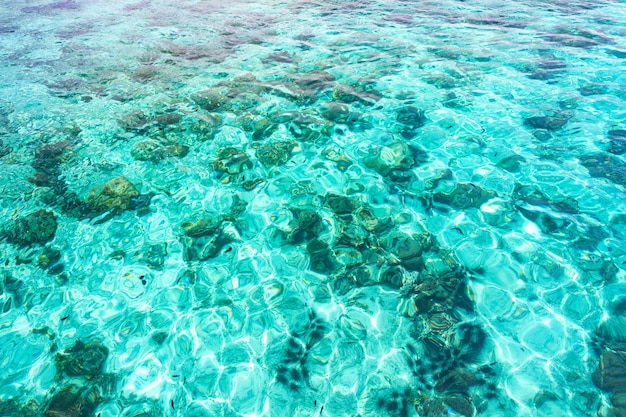 많은 물고기와 투명 한 푸른 바다 물 반사 리플의 추상 조감도