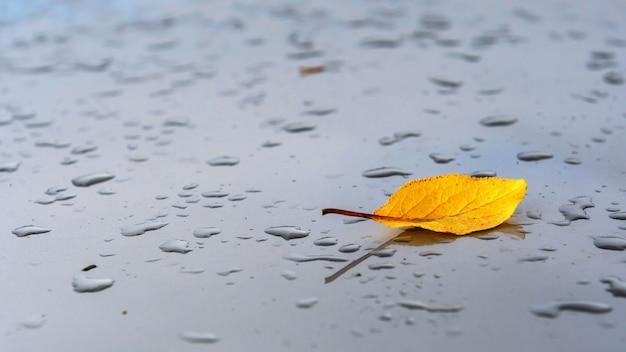 秋の抽象的な背景。雨の滴と灰色の背景に黄色の葉。