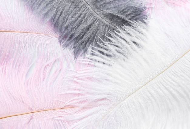 Abstract background. background  with soft colorfull feathers on white
