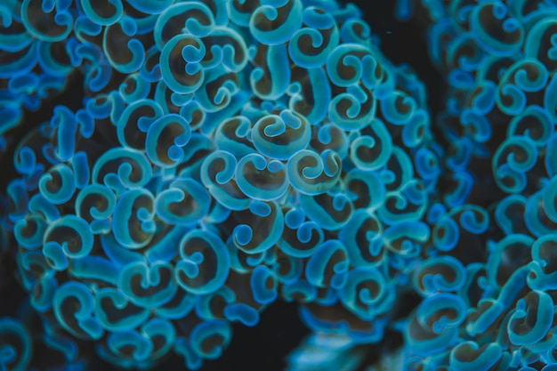 Abstract background of blue mushroom coral