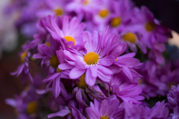 Abstract background flowers full color
