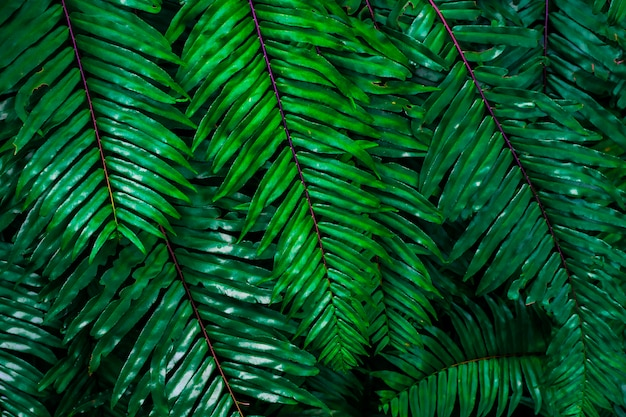 Abstract background from green leaf pattern in tropical forrest with sunlight. nature backdrop.