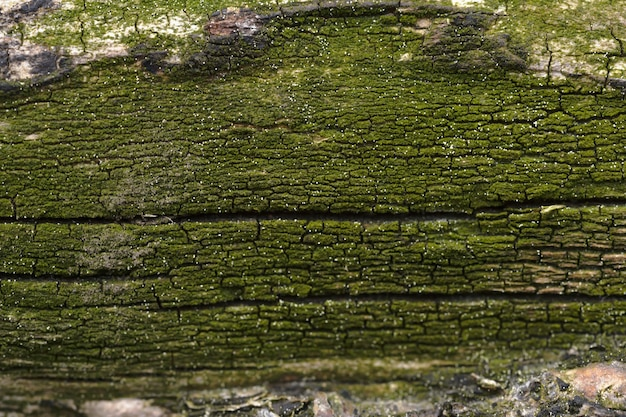 Abstract background of moss covered tree trunk. closeup topview for artworks.