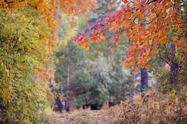 다채로운 나무와 흐릿한 가을 풍경의 추상적 인 배경