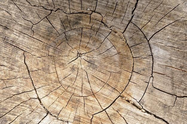 伐採された木の幹や切り株の抽象的な背景。アートワークのクローズアップのトップビュー。