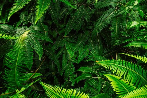 シダの葉の抽象的な背景。