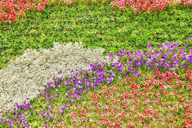 꽃 (피튜니아)의 추상적인 배경입니다. 확대.