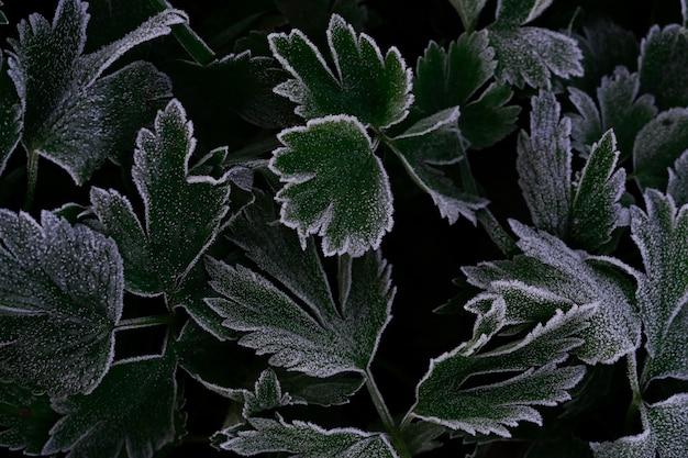 Абстрактный фон из зеленых текстурированных листьев растений с белым инеем