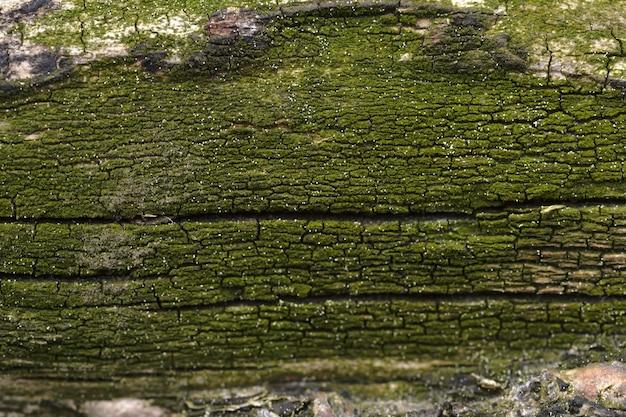 コケに覆われた木の幹の抽象的な背景。アートワークのクローズアップのトップビュー。