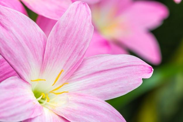 ピンクの花びらの抽象的な背景