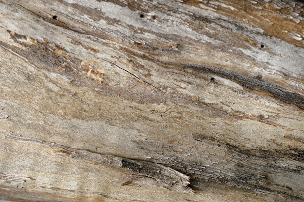 Abstract background of old cracked tree trunk. closeup topview for artworks.