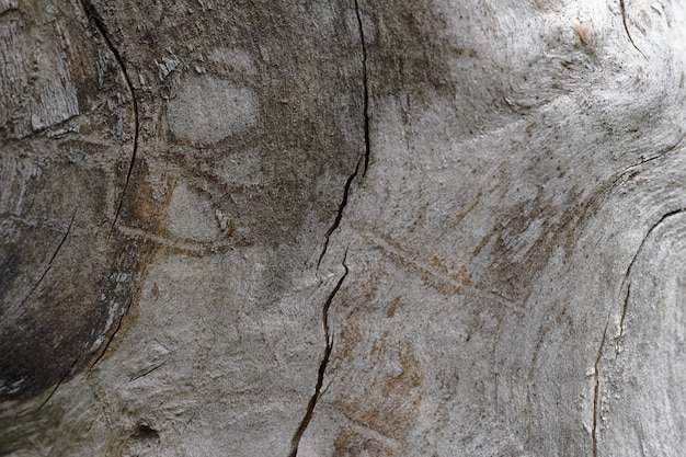 Abstract background of old cracked tree trunk