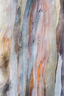 Abstract background pattern of colorful  eucalyptus deglupta tree bark